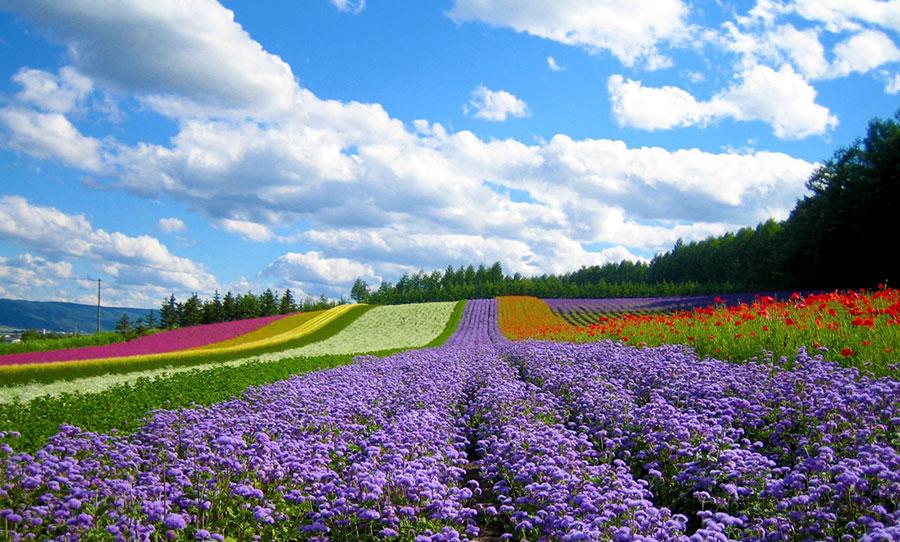 dalat flower city