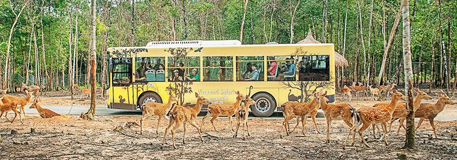 safari in Phu Quoc island